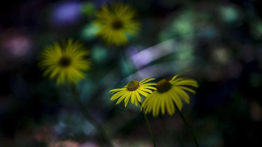 Rengarenk çiçekler görsel şölen sunuyor