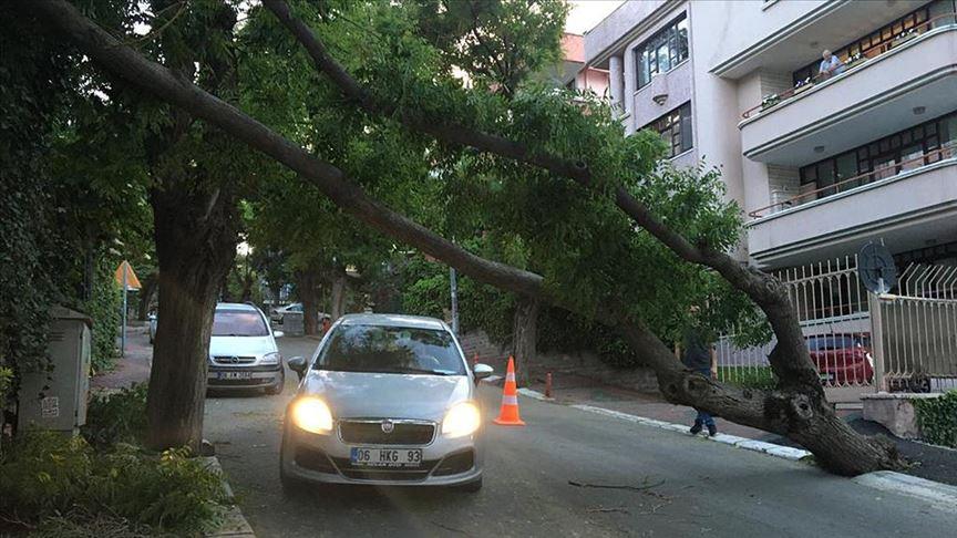 Başkentte fırtına nedeniyle ağaç devrildi!