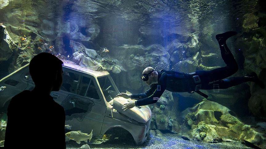 Başkentin akvaryum dalgıcının sudaki çalışması ziyaretçilerden ilgi görüyor
