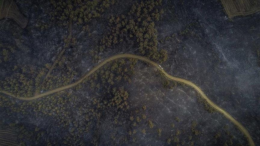 Pakdemirli: Tarihi Gelibolu Yarımadası'ndaki orman yangını kontrol altına alındı