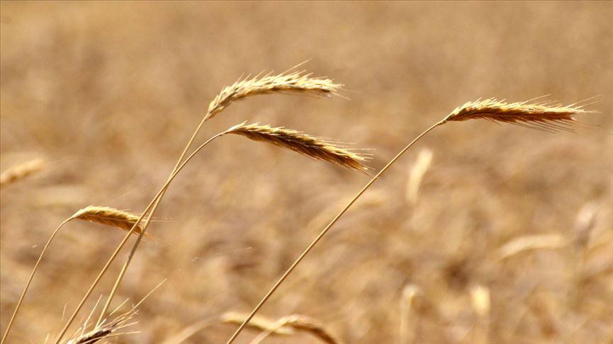 Fırıncılar, buğday, arpa ve mısır ithalatında gümrük vergisinin geçici sıfırlanmasından memnun