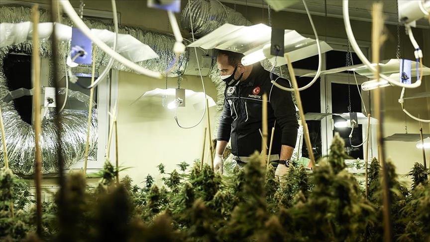 Seraya çevrilen evde 88 kök marihuana ele geçirildi!