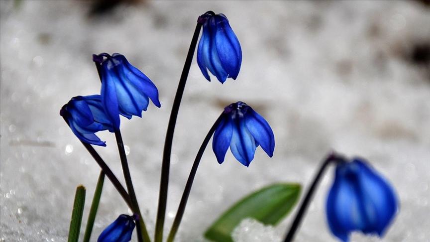 Karların erimeye başladığı Sarıkamış, canlanan doğasıyla adeta cezbediyor..