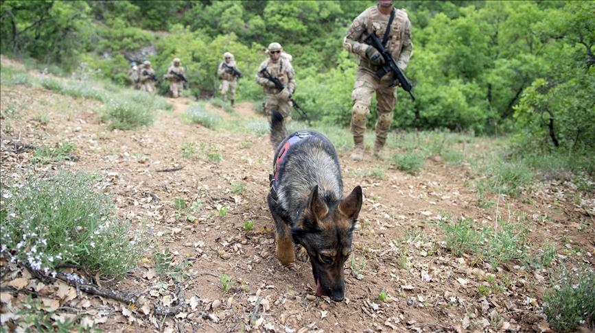 Jandarmanın 'hassas burunları' Tunceli'de terörle mücadelede önemli görev üstleniyor