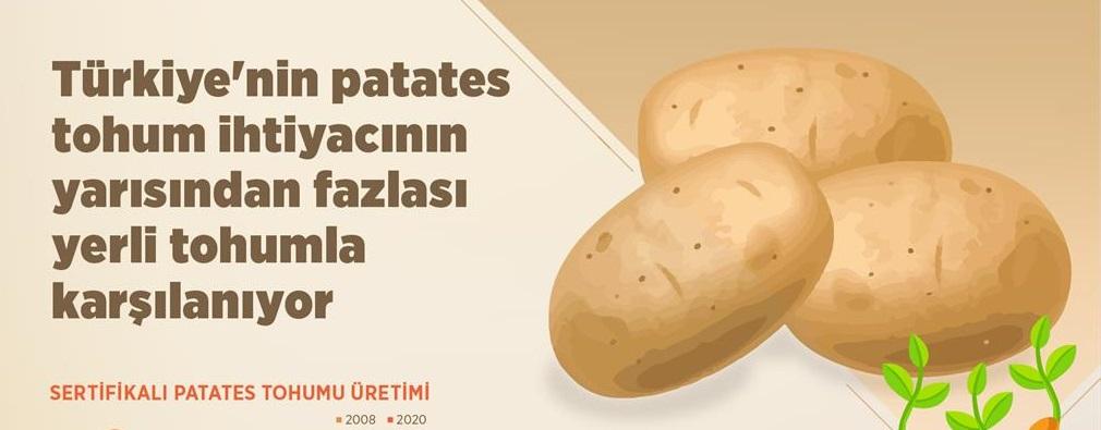Türkiye'nin patates tohum ihtiyacının yarısından fazlası yerli tohumla karşılanıyor