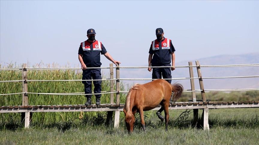 Jandarmanın özel timi çevre ve hayvanlar için mesaide