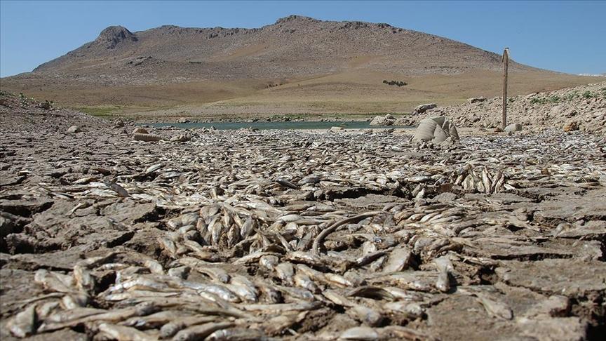Konya'da kuraklık May Barajı'nda balık ölümlerine neden oldu