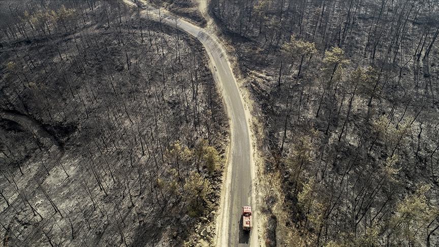 Cumhurbaşkanı Erdoğan: Orman yangınlarından etkilenen alanlar 'Genel Hayata Etkili Afet Bölgesi' ilan edildi