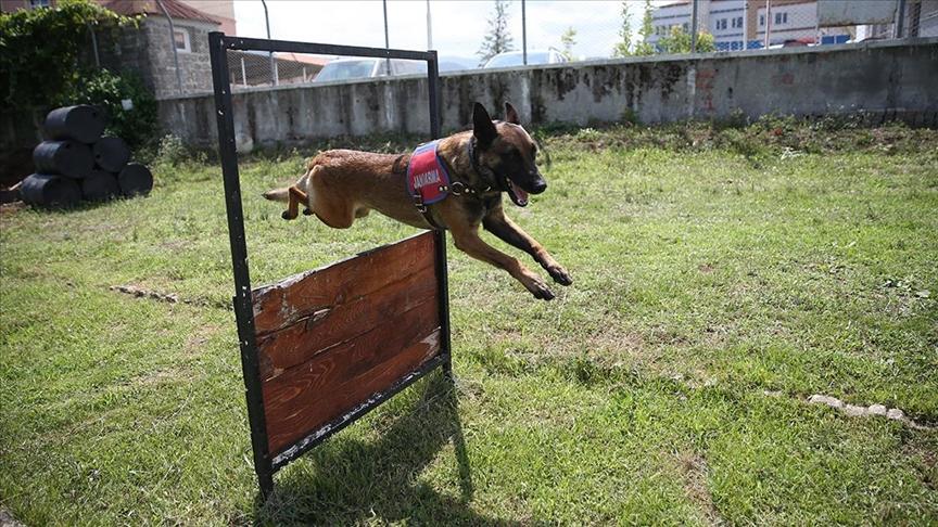 Jandarma köpekleri 'Tonya' ve 'Barut' suçlulara göz açtırmıyor!