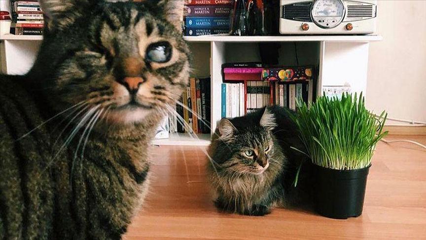 Mahkeme 'kedilerin velayeti' davasında 'Piraye' ve 'Cingöz'ün psikolojisini de gözetti