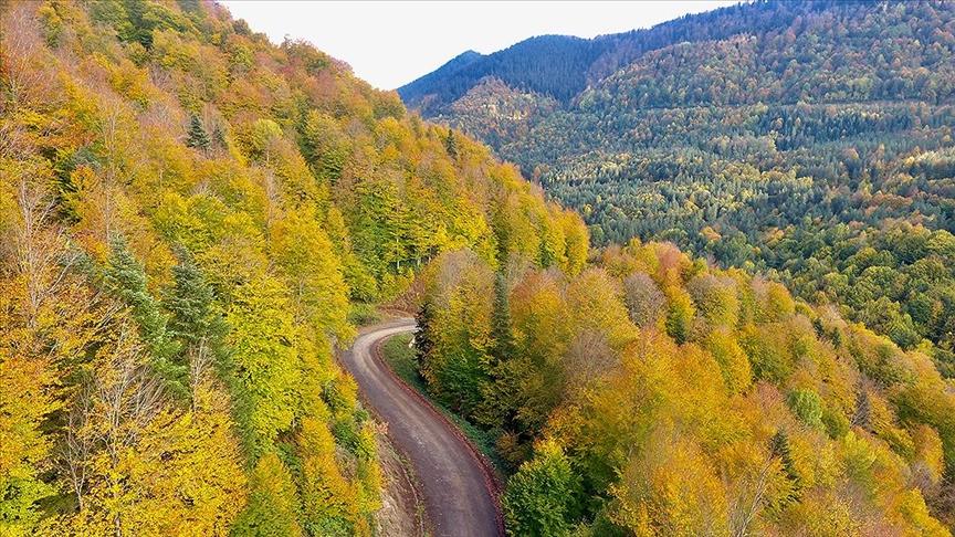 ...Düzce'nin Ormanlarında Sonbahar Renkleri...