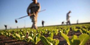 Türkiye'nin organik gıda ihracatı