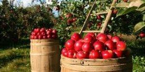 Rusya'ya ihracata elma ve nar katkısı
