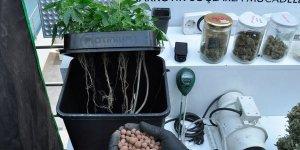 Evde topraksız tarımla Hint keneviri yetiştiren zanlı yakalandı