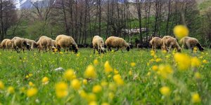 Munzur Dağları arasındaki Ovacık ilkbaharda görsel şölen sunuyor