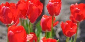 Kayseri'de ilkbaharın güzelliği görenleri büyülüyor..