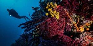 Kırmızı Mercanların Derinlerdeki Evi 'AYVALIK'