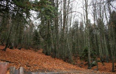 AFAM: Meclis'teki Orman Yasa Tasarısı Türkiye'nin ekolojisini bitirir (Özel)