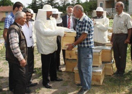 Başkentli üreticilere 16 bin 500 kovan kafkas ırkı arı dağıtıldı