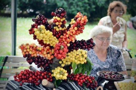 Bulgaristan'daki kiraz bayramı renkli görüntülere sahne oldu