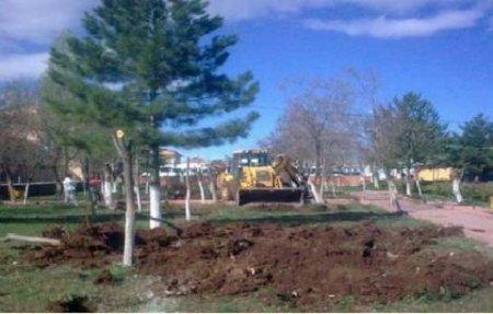 CHP'li belediye işyeri için ağaçları kesti