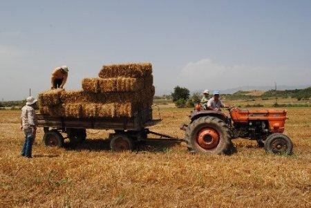 Çiftçilere hasat sonrası anız yakmayın uyarısı