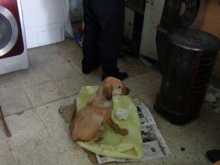 Duyarlı esnaf, donmak üzere bulduğu köpeği kurtardı