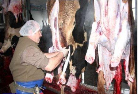 EBK, Suluova'da et kesimine başladı