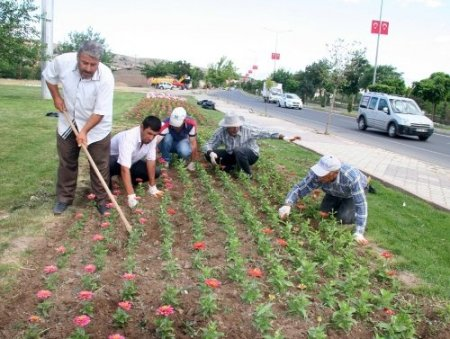 Elazığ'a 700 bin çiçek dikildi