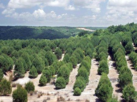 Eroğlu'ndan İstanbul'a iki yeni orman ve 5 milyon fidan müjdesi