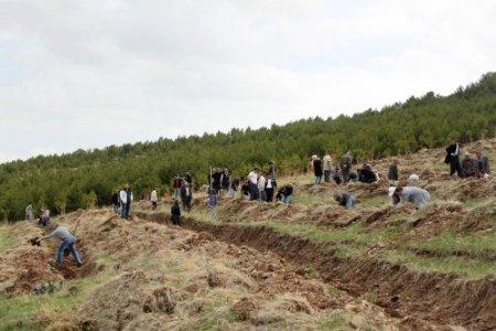 Erzurum BEAH 500 fidanı toprakla buluşturdu