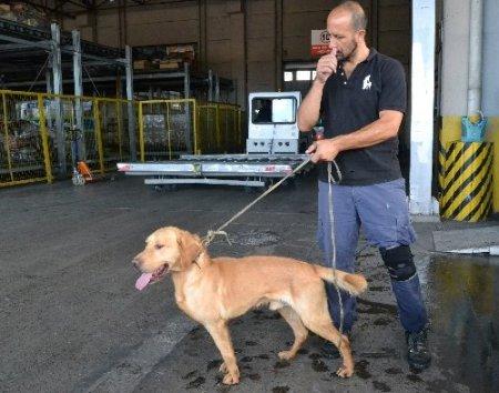 Evrak eksikliği köpekleri telef etti