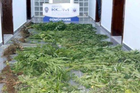 Gümüşhane'de uyuşturucu operasyonunda 20 gözaltı