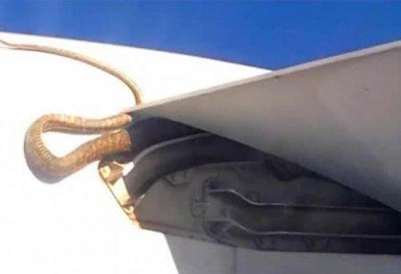 Havadaki uçağın kanadında dev piton yılanı!