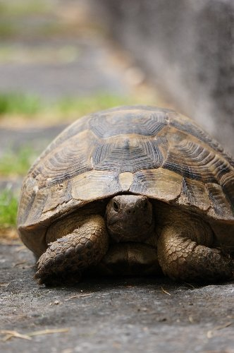 Kaplumbağanın Meclis gezisi (Özel)