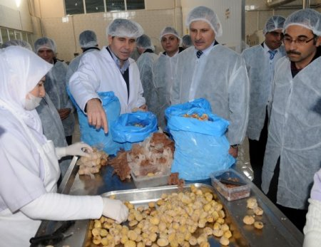Kestane şekeri ile ünlü Bursa'ya 100 bin kestane fidanı dikilecek