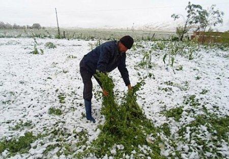 Kırgızistan'da sürpriz Haziran karı: Onlarca hayvan sürüsü telef oldu