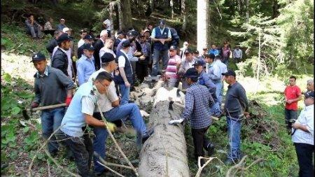 Köylülere ağaç depolama eğitimi