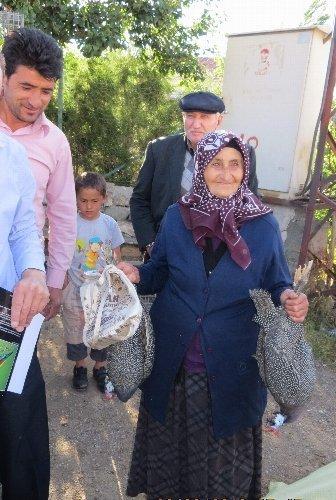 Köylülere keneyle mücadele için 500 beç tavuğu dağıtıldı