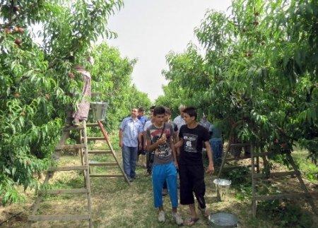 Kuzey Iraklı öğrenciler Aydın'ın meyve bahçelerine hayran kaldı