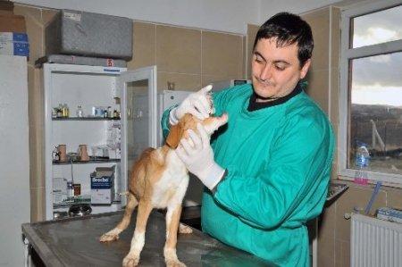 Mamak'ta evcil hayvanlara kuduz aşısı yapılıyor