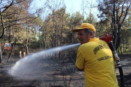 Manavgat'ta çıkan yangında 7 dönümlük ormanlık alan zarar gördü