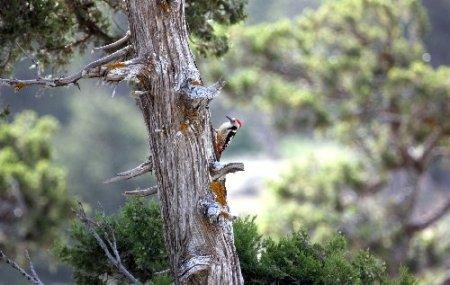 Mut'ta 6 kuş çeşidinin varlığı ortaya çıktı