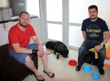 Omurilik ameliyatı geçiren köpek yeniden yürümeye başladı