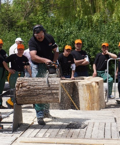 Ormancılar, kütüğü en hızlı kesmek için ter döktü
