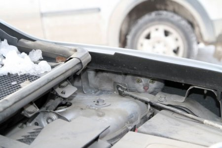 Otomobilin motor kısmına giren kediyi belediye personeli kurtardı
