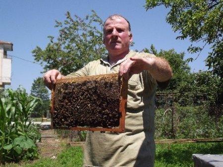 Samsun Arıcılar Birliği: Ucuz bal alayım derken sağlığınızdan olmayın