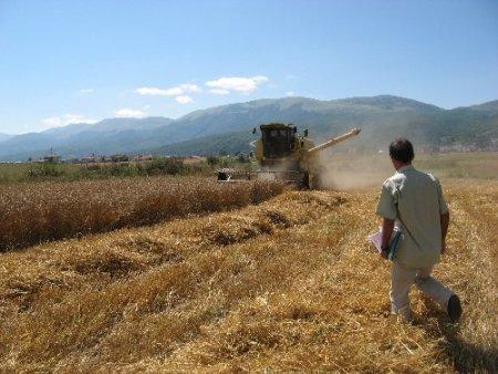 Samsun'da biçerdöverle buğday hasadı başladı