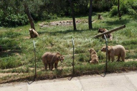 Şiddet gören ayılara barınakta özel bakım