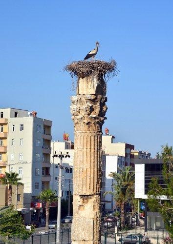 Silifke'de leylekler tarihi yerleri mesken tuttu